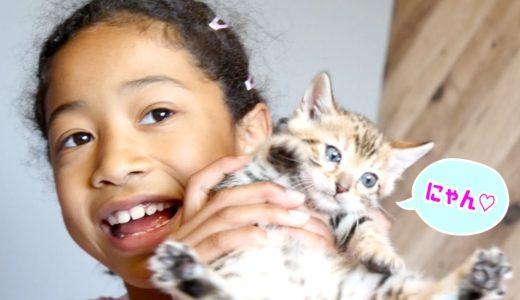 「猫飼いたい!!」かわいすぎる子猫と戯れておねだり連発!!「うちやっぱりアヒル飼いたい!」え!?どゆこと??www