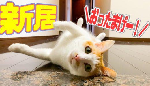 【新居】広すぎる玄関と廊下に猫がびっくりしてひっくり返っちゃった!