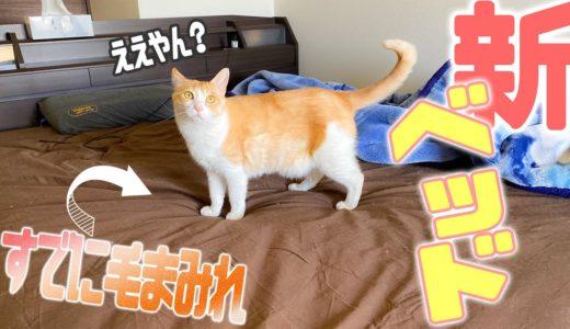 猫たちの新居大探索!巨大な新ベッドに猫たちの反応は…?【ルームツアー】
