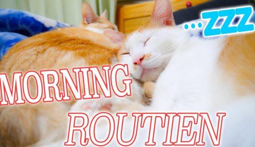 飼い主大好きな猫たちのモーニングルーティン【Cat's Morning routien】