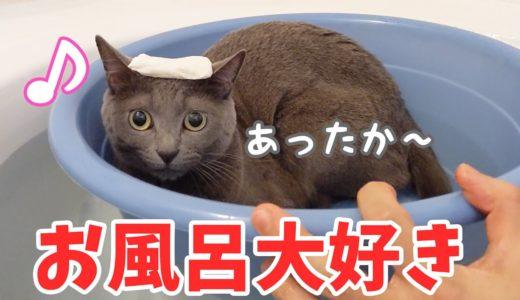 お風呂で一緒に温まるのにハマってる猫