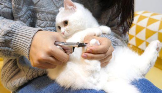 大嫌いな爪切りを我慢するため必死にしがみつく猫!