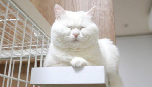 うちの猫は構ってもらえないとカリン様になるようです。