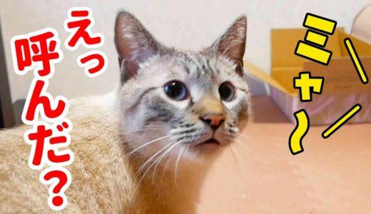 猫語翻訳アプリで猫に話しかけてみたら意外な返事が返ってきた…!