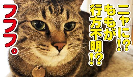 家庭内失踪する猫と焦る父!