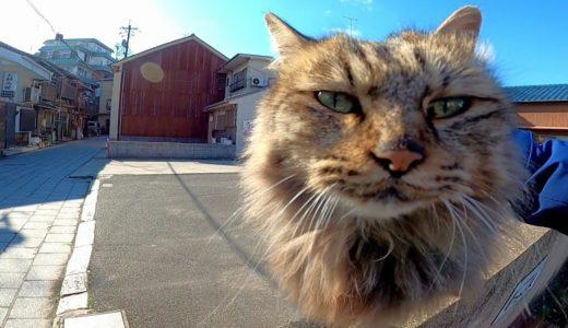 駐車場にいたフワフワ長毛猫をナデナデしてきた