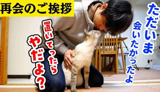 【猫と飼い主の再会】帰省する飼い主に置いていかれた猫…ついに飼い主と再会!