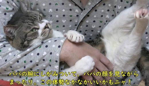 ねこ好き悩殺!激カワな抱っこ姿のリキちゃん☆両手でパパの腕をギュッとつかむ猫【リキちゃんねる・猫動画】Cat video キジトラ白猫の居る暮らし