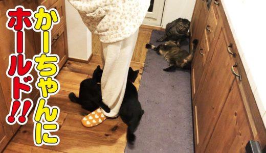 兄猫達のケンカを見学する弟猫達