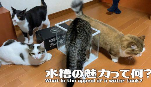 行列のできる水槽に並ぶ猫がかわいい