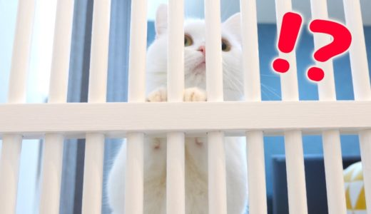 脱走防止ゲートを設置した時の猫の反応やいかに…!?