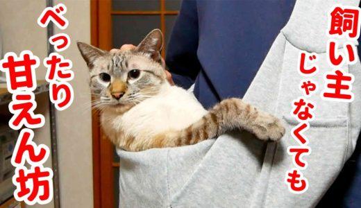 抱っこが好きすぎる猫に飼い主の友人が初めて抱っこ紐を使ってみた結果…