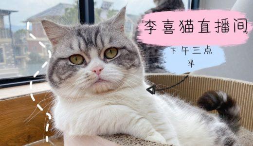15只胖猫在线卖萌,下午三点半,不见不散