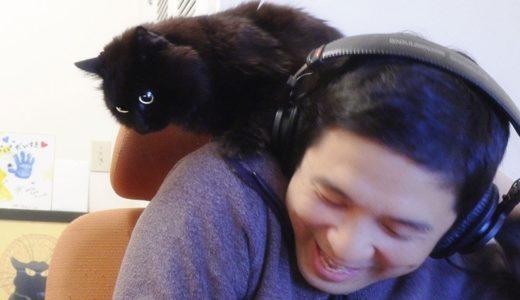 【しゃべる猫】飼い主のことが好きすぎて肩の上で仕事に参加する猫【しおちゃん】