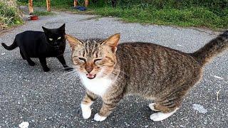 夕方の猫の集会 野良猫たち何か会話してないか?