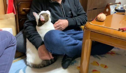 よそよそしい猫とおじいちゃんにホッコリする