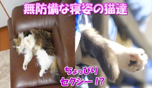 猫達の無防備な寝姿が超セクシー