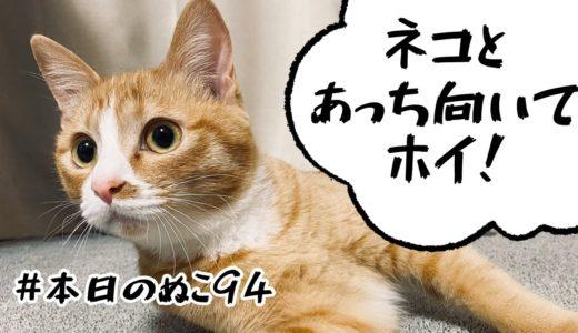 本日のぬこ94【ネコとあっち向いてホイ】