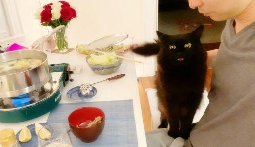 【しゃべる猫】鍋のチキンが欲しいと必死に語る猫【しおちゃん】