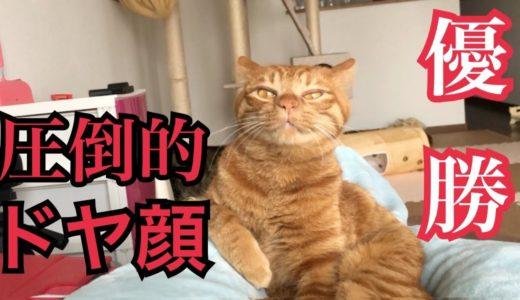 自分をきんたと信じて止まない一般猫が飼い主の上で優勝する動画です。