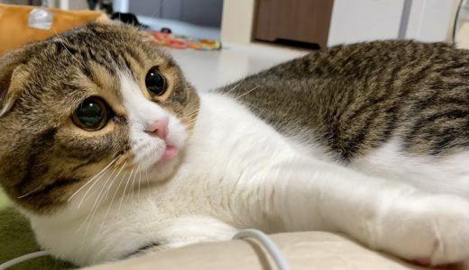 朝から元気いっぱいに走り回る親子猫を盗撮してみた