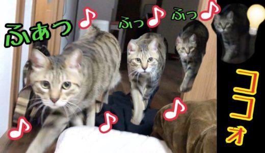 呼んだら鳴きながら走ってくるかわいい猫 パート2