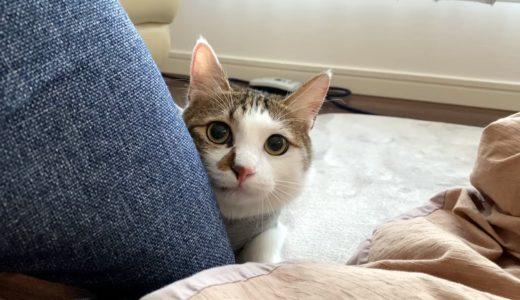 猫がカカカ!とクラッキングするのはどんな気持ち?