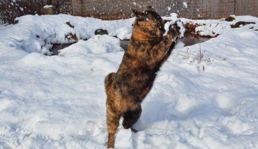 猫に雪をぶつけたら全部ブロックされた。I threw snowballs at a cat, all snowballs were blocked.
