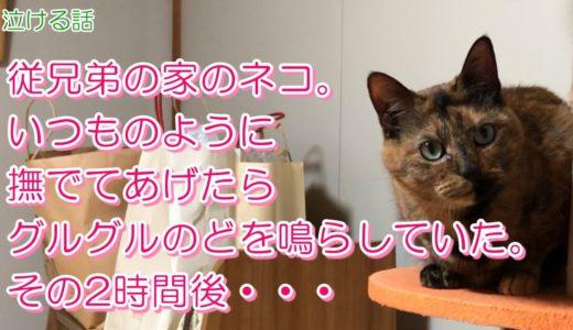 従兄弟の家のネコ。いつものように撫でてあげたらグルグルのどを鳴らしていた。その2時間後・・・