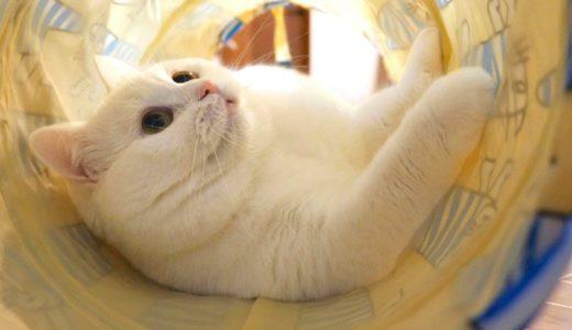 久しぶりのトンネルを存分に満喫するモフ猫!
