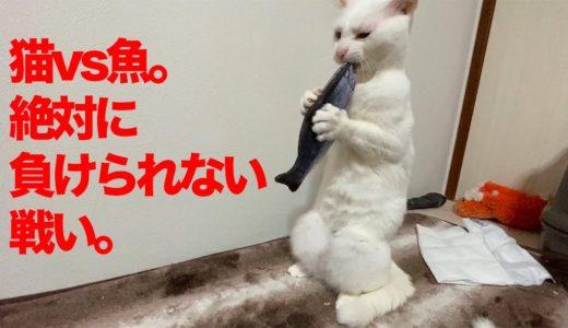 猫部屋の死闘!ウチューネコチャンVSお魚 The match of 'The Spacecat vs The fish toy'