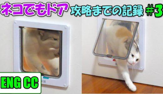 猫達が専用扉ネコでもドアを攻略するまでの記録#3 全身全霊で突破に挑んだネコ吉が奇跡を起こす!【Eng CC】