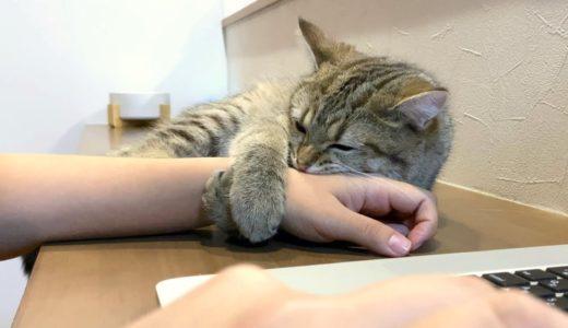 子猫のくっつき虫がすごくて作業が進みません…。