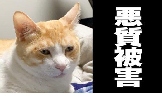【大炎上】悪質!猫ツンツン男に猫たちが被害にあう…