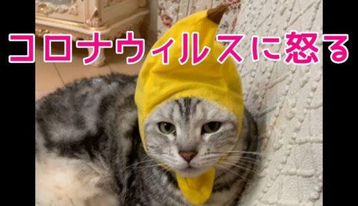 大阪弁をしゃべる猫がコロナウィルスに説教!おしゃべりペット