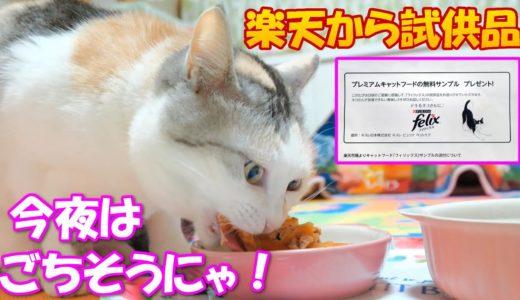 楽天から届いた試供品のfelixを美味しそうに食べる三毛猫ネコ吉