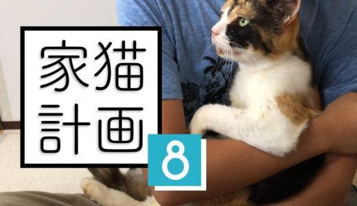 野良猫だったはずだけど、どう見てもすでに家猫のミケ┆保護5日目【 #のらねこ家猫化計画 ⑧ 】