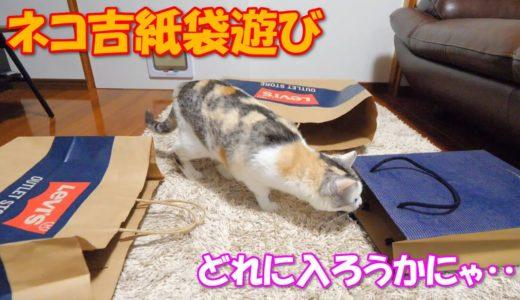 とりあえず全ての紙袋に入ってみた三毛猫ネコ吉