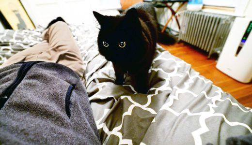 【しゃべる猫】飼い主のことが好きすぎておやすみのチューをしにくる猫【しおちゃん】