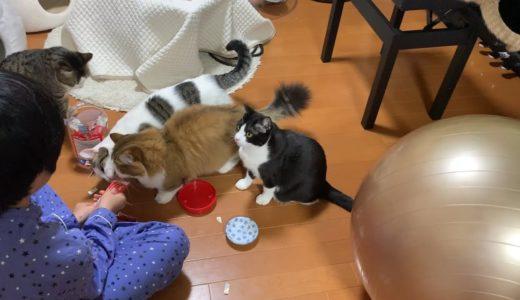 クレームを言いたいのを我慢する猫