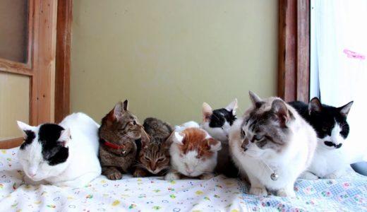 7匹の猫 2020 Seven cats 200304