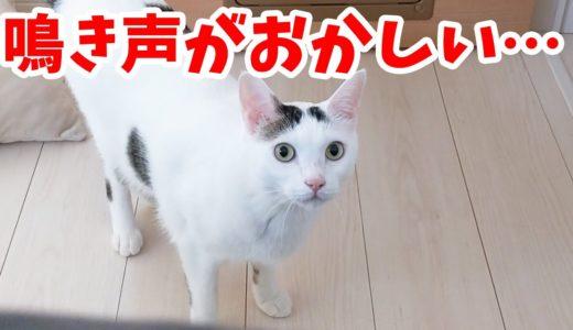 変な鳴き声で飼い主を起こす猫