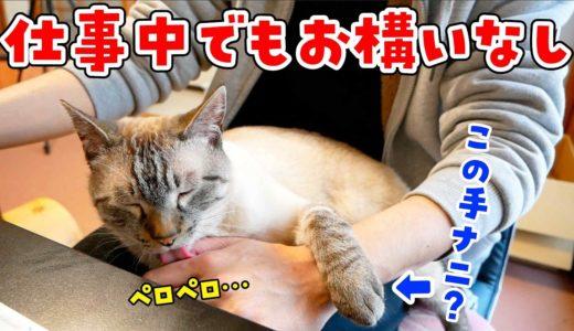 テレワーク中の飼い主にどうしても甘えたい猫がかわいすぎた