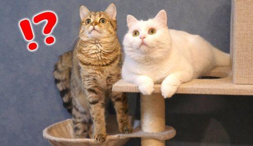 とあるものを見て目がぎらんぎらんに輝く猫達!