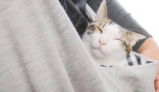 「抱っこ袋」で更にひっつき虫になった猫