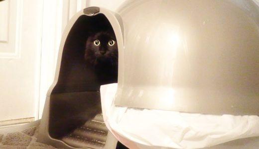 【しゃべる猫】トイレでとてもスッキリしたのを教えてくる猫【しおちゃん】