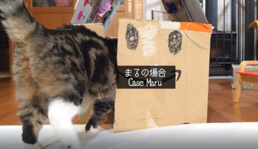 段ボールハウスと箱とねこ。-The corrugated cardboard house and box and Maru&Hana.-