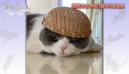 ねこ自慢#34ご出演ニャンコたち【4月11日OA】