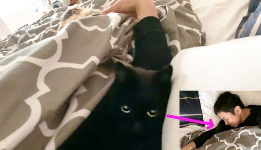 【しゃべる猫】布団に入ってきて腕まくらをする猫【しおちゃん】