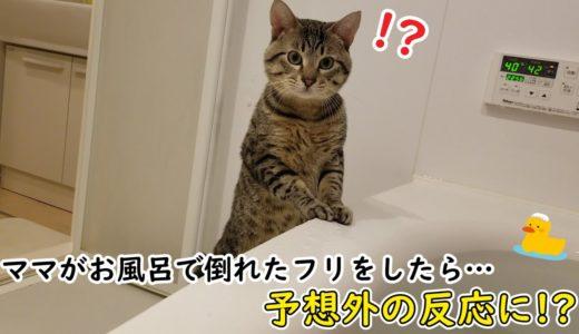 お風呂嫌いな猫が溺れているママを心配して取った行動が…(涙)